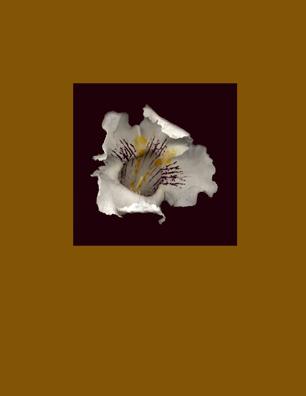 Kenneth Hemmerick - Scanned Flowers - Catalpa