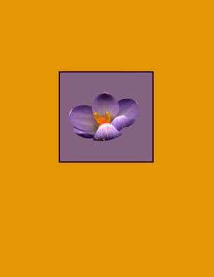 Kenneth Hemmerick - Scanned Flowers - Crocus