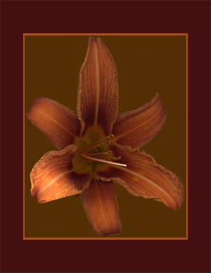 Kenneth Hemmerick - Scanned Flowers - Day Lily