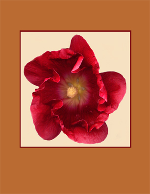 scanned flowers kenneth hemmerick hollyhock