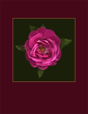 Kenneth Hemmerick - Scanned Flowers: Rose