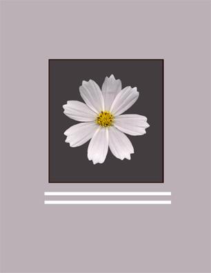 Kenneth Hemmerick - Scanned Flowers - White Cosmos